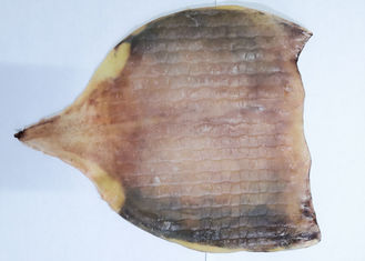 China Raw Material  Whole Dried Squid Body  For Fresh Roasted Squid No Starch supplier