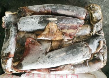 Light Red Frozen Giant Squid Whole Round 1-2kg Dosidicus Gigas